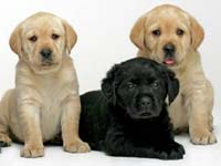 Affiliated: Irish Guide Dogs