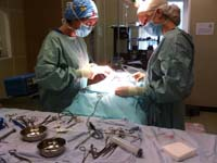 Veterinary Hospital Soft Tissue Surgery