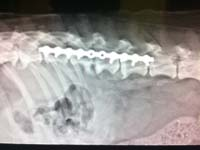 specialist surgery spinal